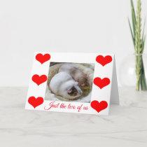Guinea pigs Valentine's card