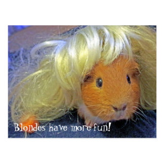 guinea pigs with blonde wig postcard