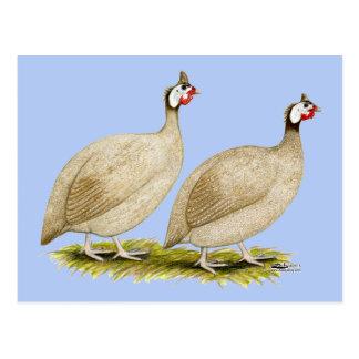 Guinea pulimentan las aves de Dundotte Tarjeta Postal