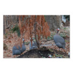 Guineafowl Poster
