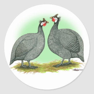 Guineas:  French Classic Round Sticker