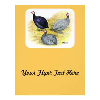 Guineas Purple, Coral Blue and Lavender Flyer