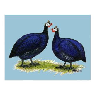 Guineas Royal Purple Pair Postcard