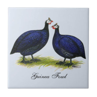 Guineas Royal Purple Pair Tile