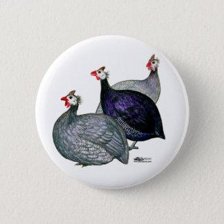 Guineas Three Button