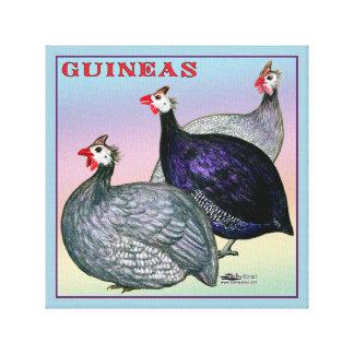 Guineas Three Fowl Canvas Print