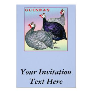 Guineas Three Fowl Card