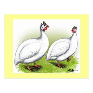 Guineas:  White Postcard