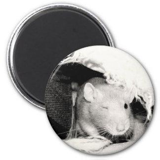 Guiño de la rata imán redondo 5 cm