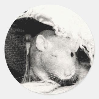 ¡Guiño de la rata! Pegatina Redonda