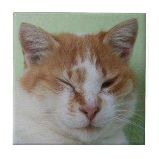Guiño lindo del gato del color del BI Azulejo Cuadrado Pequeño