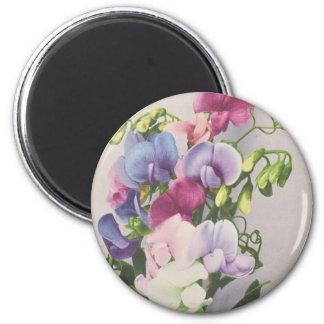 Guisante de olor 1907 imán redondo 5 cm