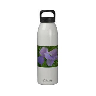 Guisante de olor púrpura delicado botallas de agua
