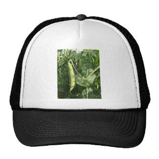 Guisantes en una vaina en una vid gorras