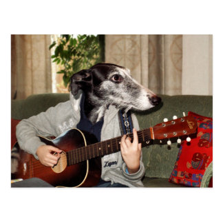 Guitar dog postcard