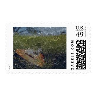 Guitar Dream Stamps