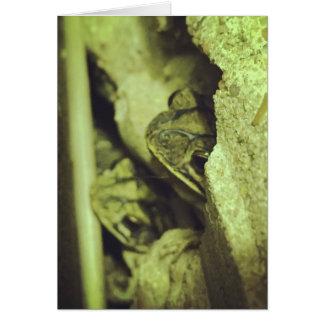 Gulf Coast Toad Card