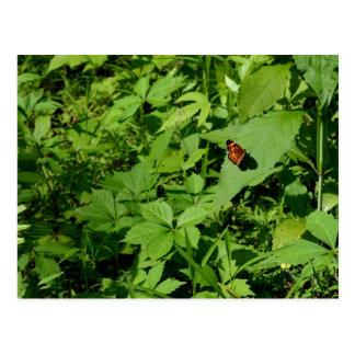 Gulf Fritillary Butterfly-13 Postcard