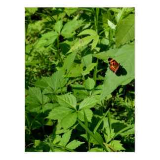 Gulf Fritillary Butterfly-13 Postcards