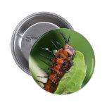 Gulf Fritillary Butterfly Caterpillar Button