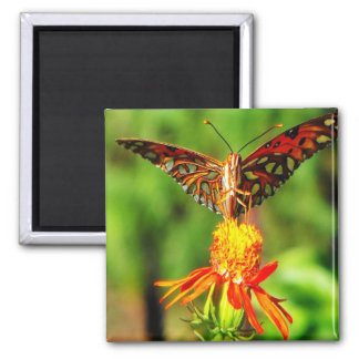 Gulf Fritillary Butterfly Front View 2 Inch Square Magnet
