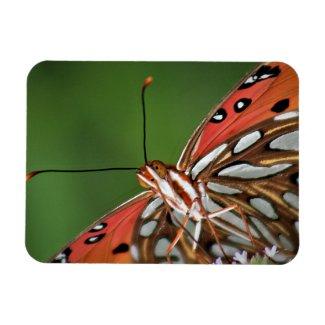 Gulf Fritillary Butterfly Magnet