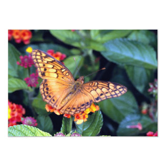 Gulf fritillary butterfly, Mexico Announcement