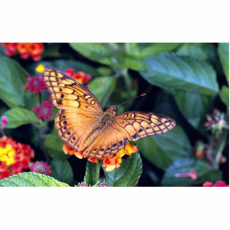 Gulf fritillary butterfly, Mexico Photo Cut Outs
