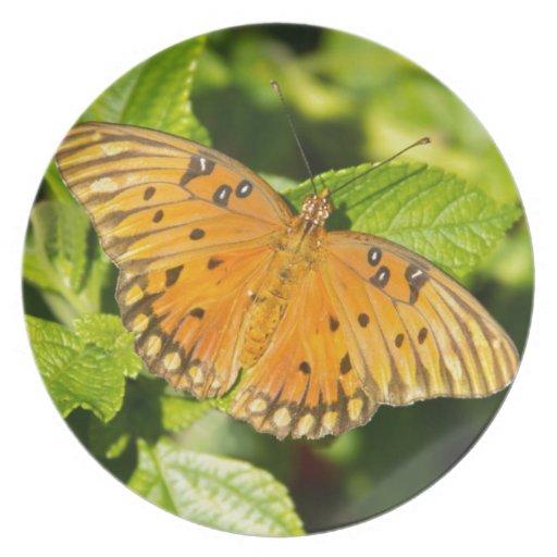 Gulf Fritillary Butterfly Plate