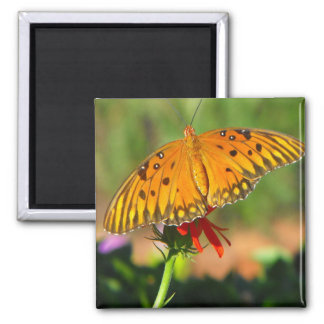 Gulf Fritillary Butterfly Upclose 2 Inch Square Magnet