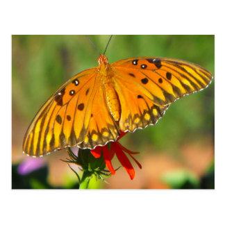 Gulf Fritillary Butterfly Upclose Postcard