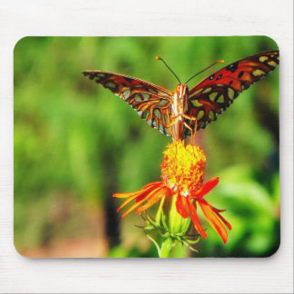 Gulf Fritillary Front View Mouse Pad