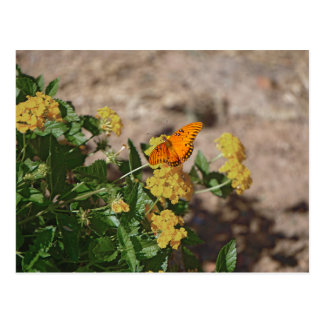 Gulf fritillary on lantana flowers postcard