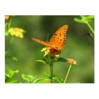 Gulf Fritillary on Lantana Postcard