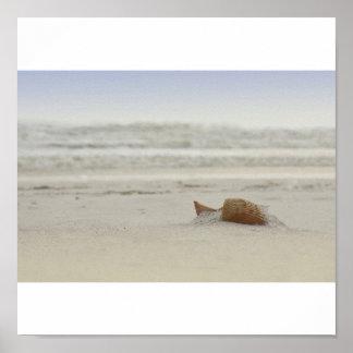 Gulf Shore Shell Poster