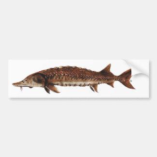 Gulf Sturgeon - Acipenser oxyrinchus desotoi Bumper Sticker
