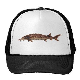 Gulf Sturgeon - Acipenser oxyrinchus desotoi Mesh Hat