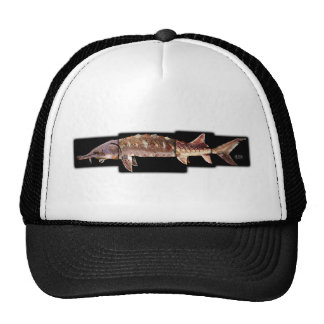 Gulf Sturgeon - Acipenser oxyrinchus desotoi Hats