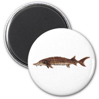Gulf Sturgeon - Acipenser oxyrinchus desotoi Refrigerator Magnet