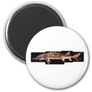 Gulf Sturgeon - Acipenser oxyrinchus desotoi Fridge Magnets