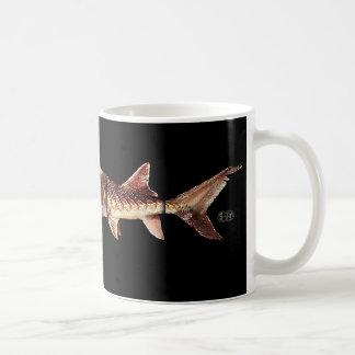 Gulf Sturgeon - Acipenser oxyrinchus desotoi Mug