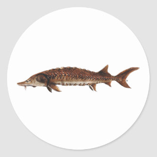 Gulf Sturgeon - Acipenser oxyrinchus desotoi Round Sticker