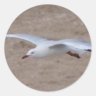 Gull 4 classic round sticker