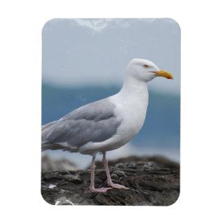 Gull Flexible Magnet Vinyl Magnet