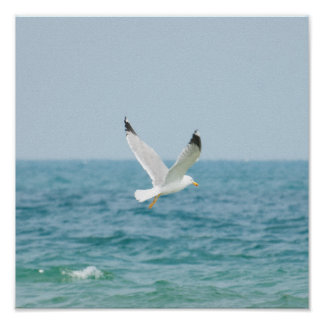Gull flying above sea poster