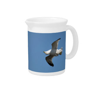 Gull Flying Upside Down Funny Wildlife Photography Pitcher