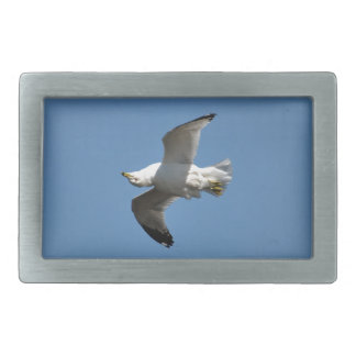 Gull Flying Upside Down Funny Wildlife Photography Rectangular Belt Buckle