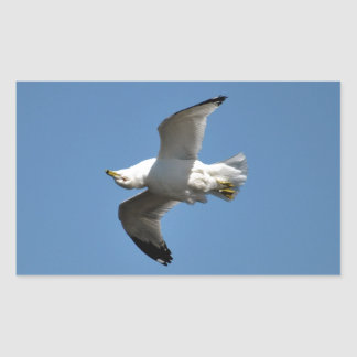 Gull Flying Upside Down Funny Wildlife Photography Rectangular Sticker