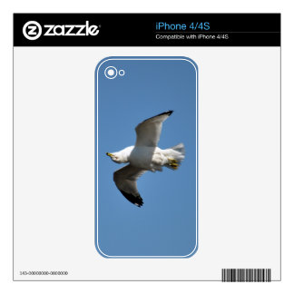 Gull Flying Upside Down Funny Wildlife Photography Skin For The iPhone 4S