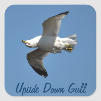 Gull Flying Upside Down Funny Wildlife Photography Square Sticker